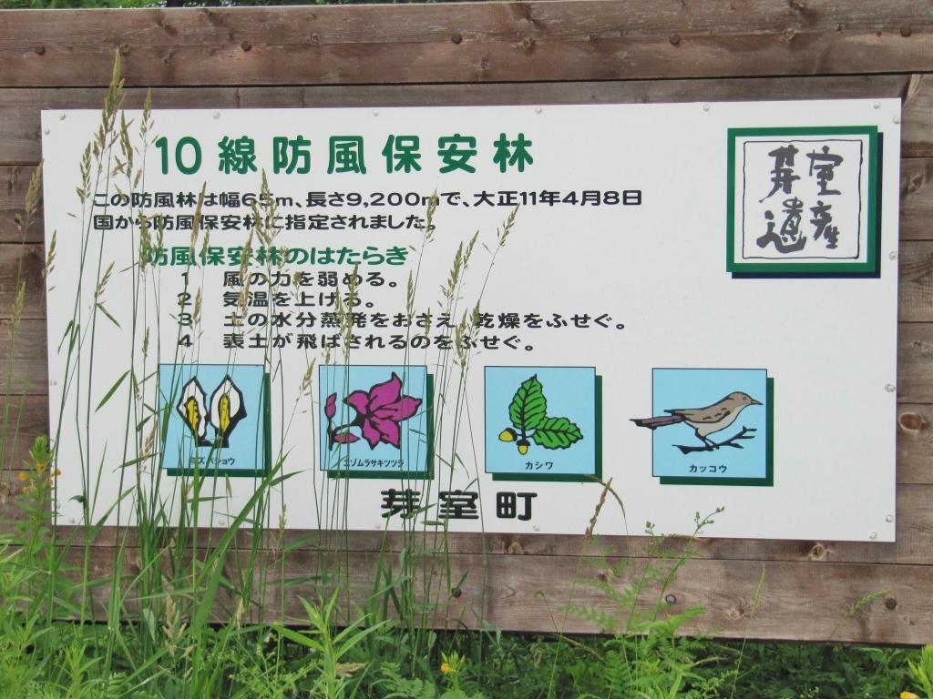 10線防風保安林 (1)