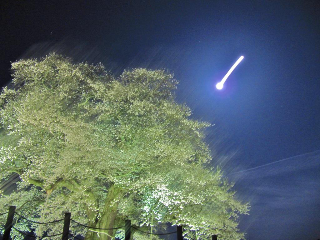 醍醐桜 (9)