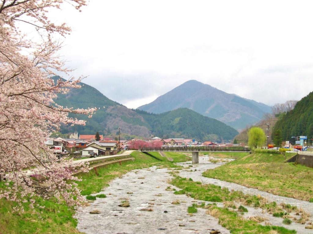 凱旋桜 (1)