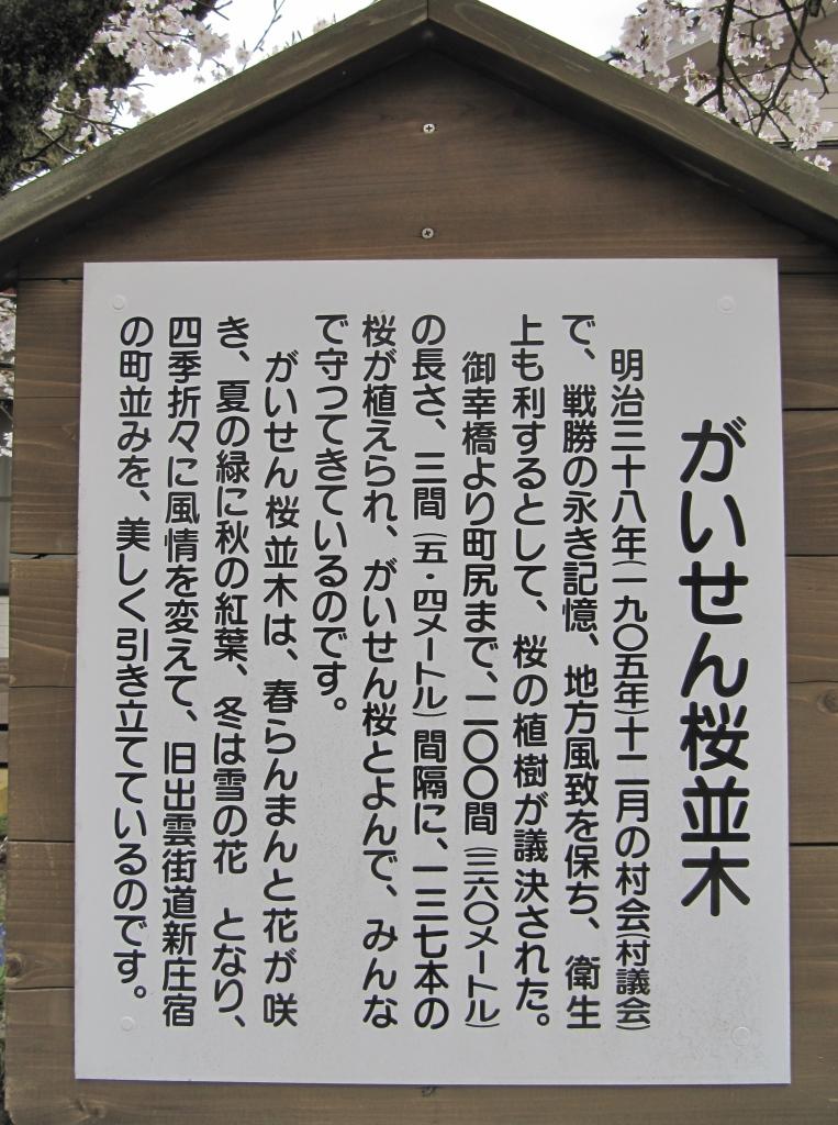 凱旋桜 (5)