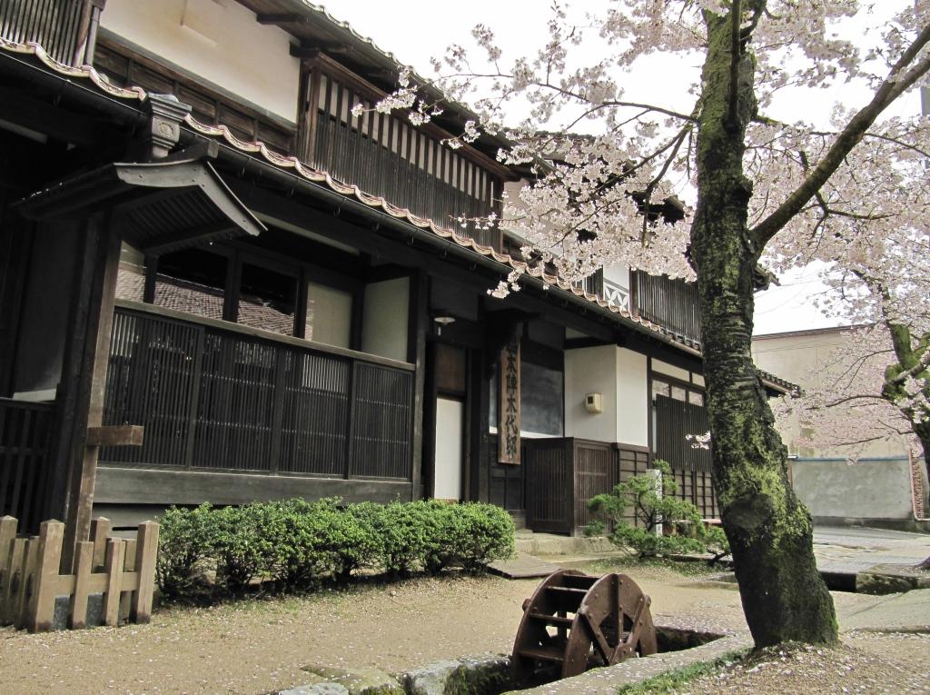 凱旋桜 (7)