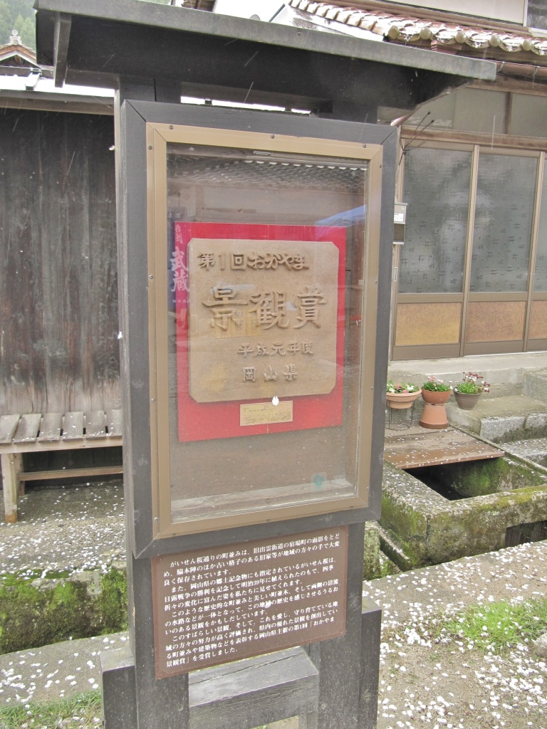 凱旋桜 (8)