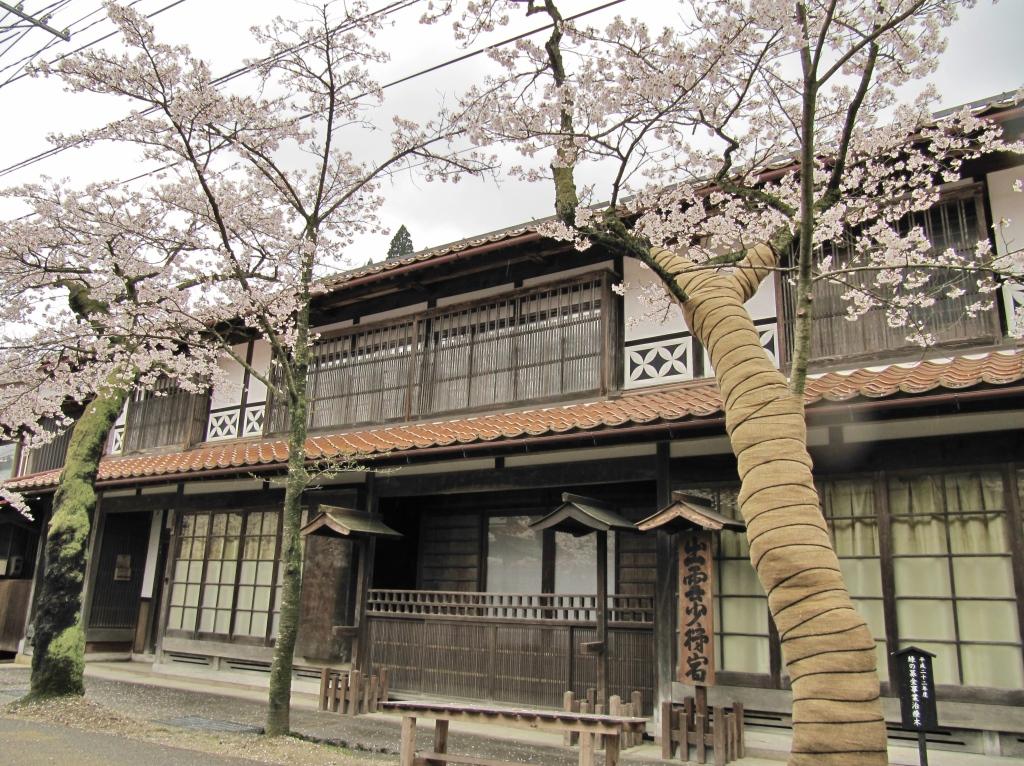 凱旋桜 (12)