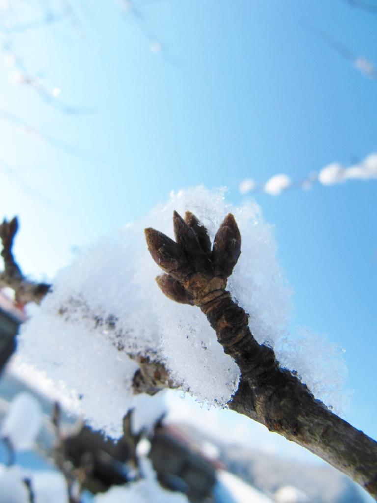 角館の冬 (13)
