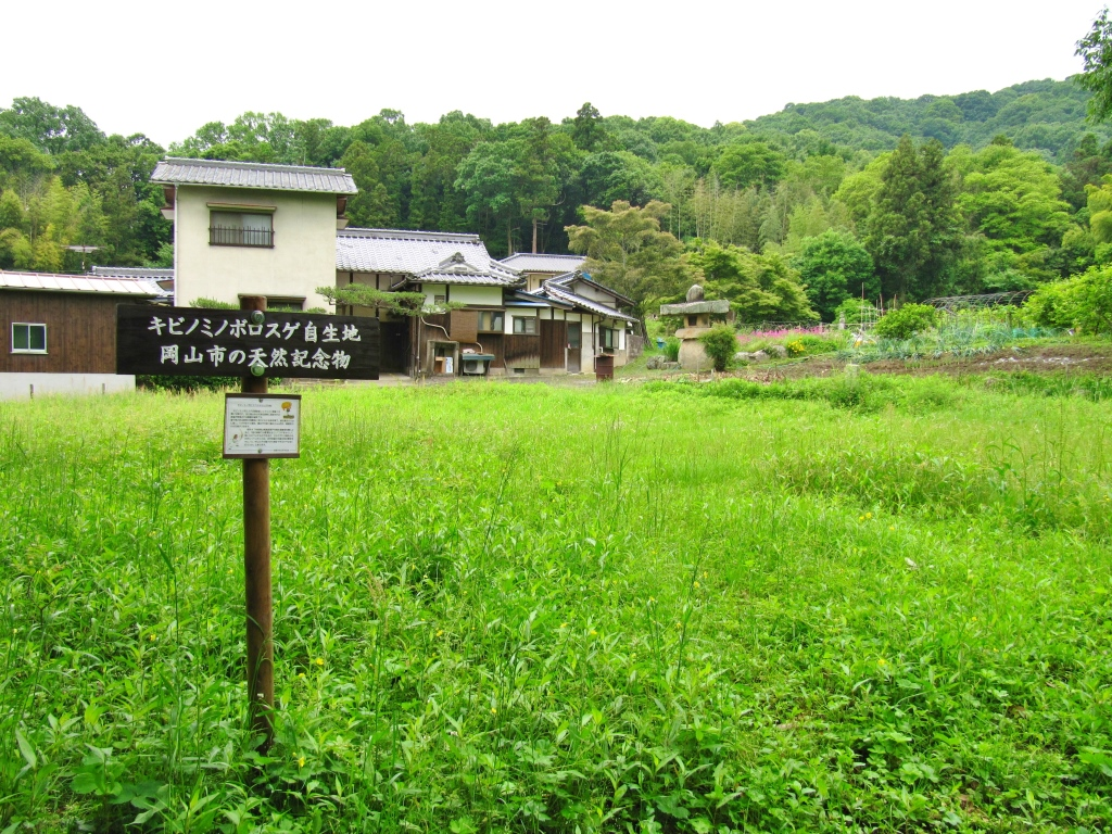 吉備津彦神社 (6)