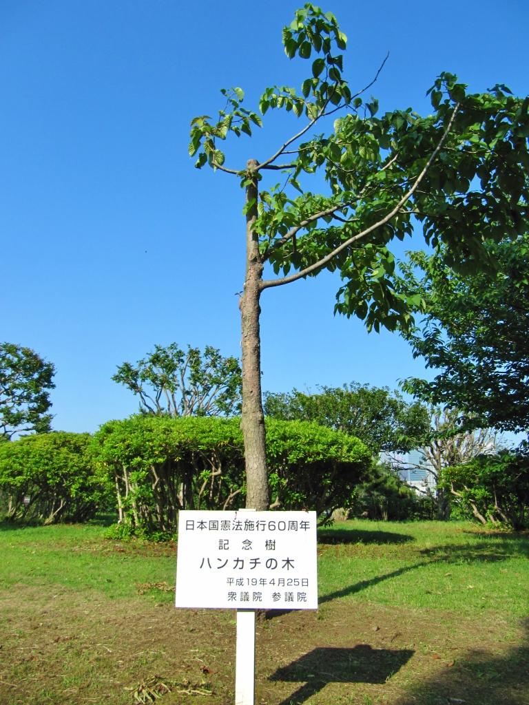 国会前庭北庭 (4)