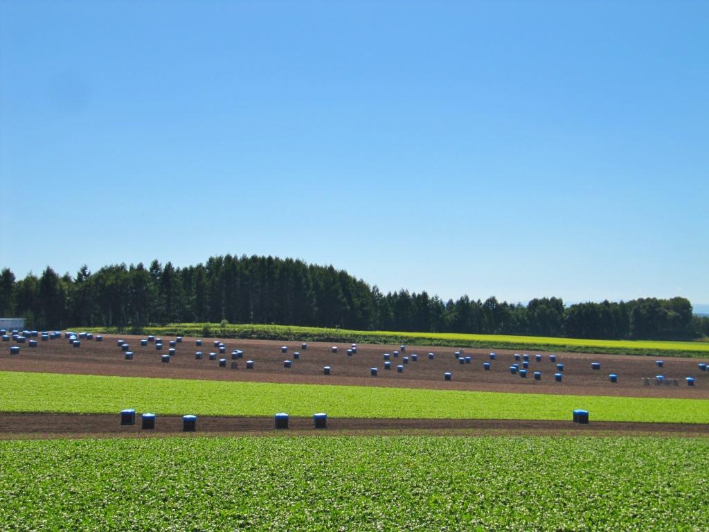 メルヘンの丘 (3)