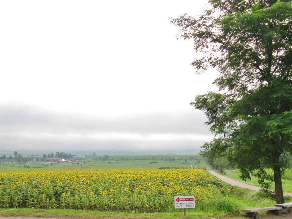 北竜ひまわり畑 (9)