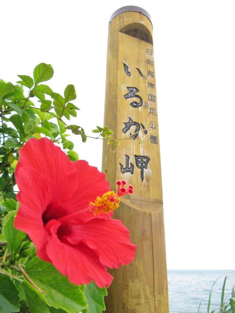いるか岬 (5)