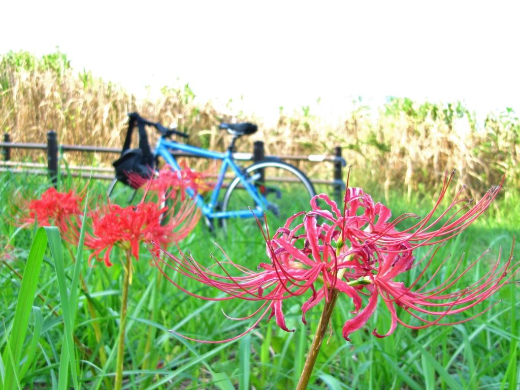 自転車と秋