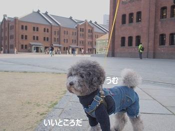 ジジ赤レンガ倉庫20140309-4