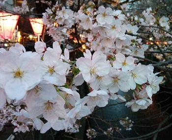 目黒川20140328