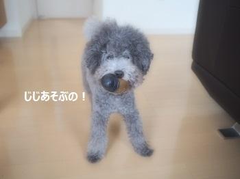 ジジさん脱走20140607-1