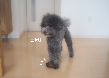 ジジさん脱走20140607-2
