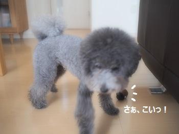 ジジさん脱走20140607-3