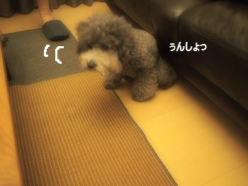 P6230169.jpg