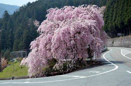 栃谷口バス停 (2)