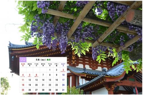5月-1 南円堂の八重藤