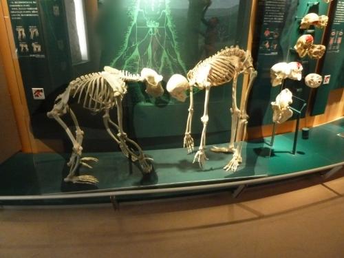 自然史博物館「D自然界におけるヒト」