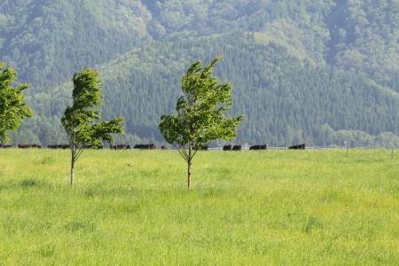 前森のウシ