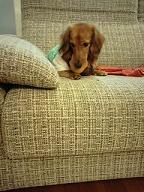 横目の犬太郎