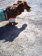 ボールくわえる犬太郎