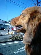 ドライブ犬太郎
