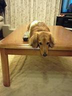 テーブルの↑の犬太郎