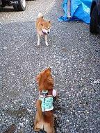 犬太郎と太郎くん