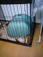 小さい犬太郎