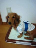 浴衣の犬太郎