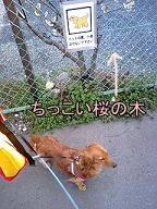桜と犬太郎のはず・・・