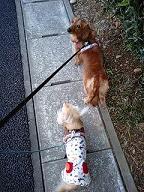 カメラ大好き犬太郎