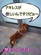 名残惜しい犬太郎