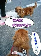 犬太郎とアンちゃん