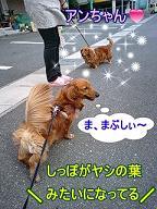 犬太郎とアンちゃん2