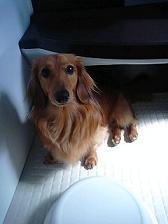 お風呂前犬太郎