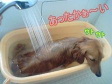 犬太郎お風呂