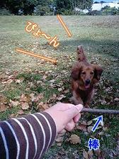 ジャンピング犬太郎