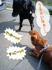 ゆきちゃんと犬太郎