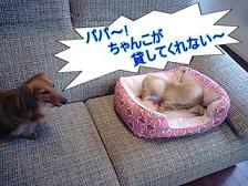 叫ぶ犬太郎