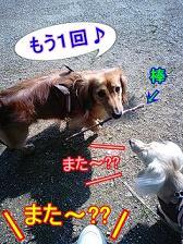 おねだり犬太郎