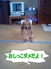 実家にて犬太郎