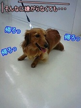 帰りたい犬太郎
