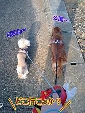 お散歩どこいく?