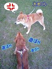 太郎くんと犬太郎