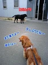 遊びたい犬太郎