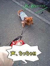 犬太郎副隊長