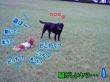 うるさい犬太郎