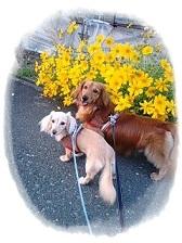 お花とワンコ達